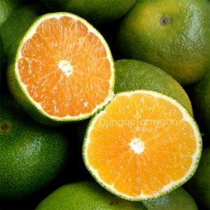 Giống cây cam sành